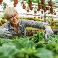 work and travel in retirement: Retired woman working in a garden